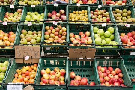 selection of apples photo