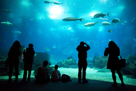 LISBON, PORTUGAL- January 12th, 2015: The interior of the aquarium in Lisbon on the 12th of january 2015 Lisbon, Portugal. The lisbon aquarium is the 2nd biggest in europe. Editorial