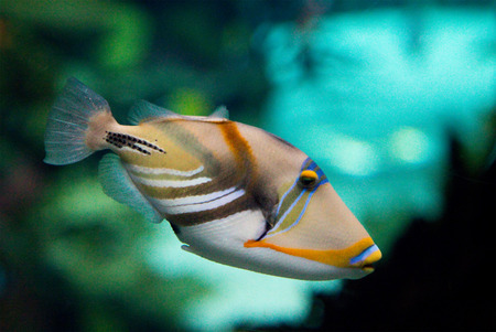 live coral: fish