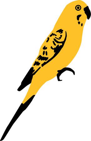 budgie: Yellow Budgie Illustration