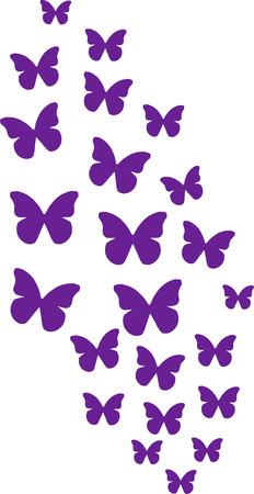 Bunch of purple butterflies