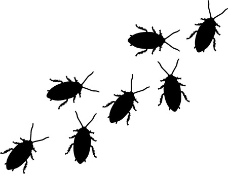 disgust: Group of Cockroaches