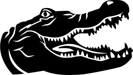 cocodrilo: Cabeza de cocodrilo