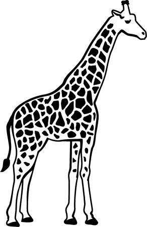 giraffe silhouette: Giraffe silhouette with pattern