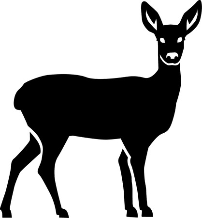 roe deer: Roe Deer Illustration