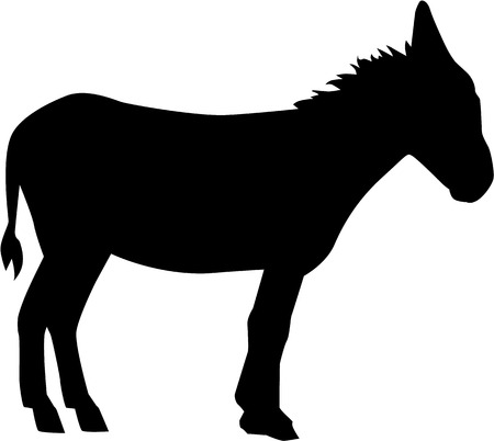 donkey: Donkey on white background