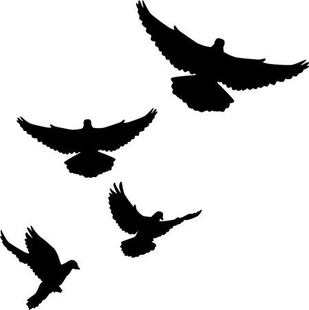 Dove swarm doves flying