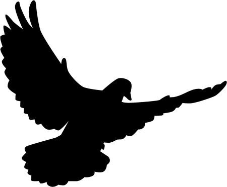 Flying silueta de la paloma Foto de archivo - 43622535