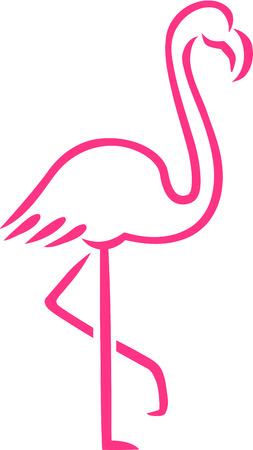 flamenco ave: L�neas Pink Flamingo dibujados