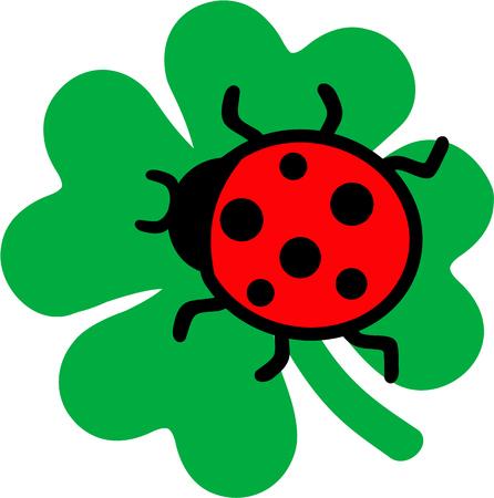 clove: Ladybug sitting on a clove