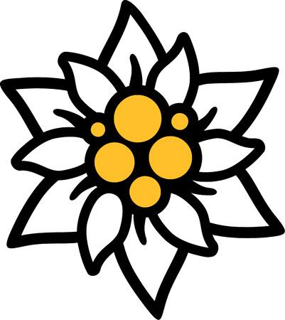 Edelweiss fleur Banque d'images - 45357424
