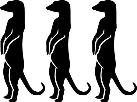 Three merkats standing and looking