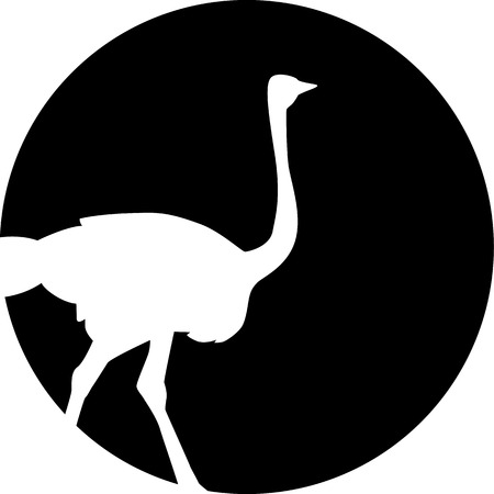 emu: Ostrich silhouette in front of the moon