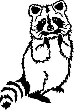 raccoon: Cute raccoon standing Illustration
