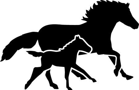 Madre cavallo e puledro in esecuzione