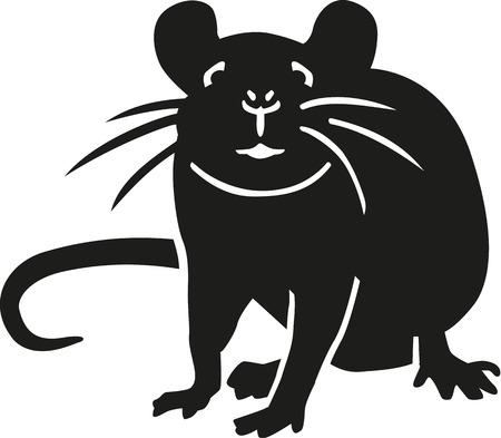 Rat looking at you