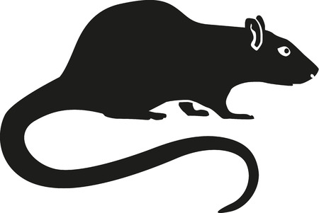 long tail: Rat with long tail