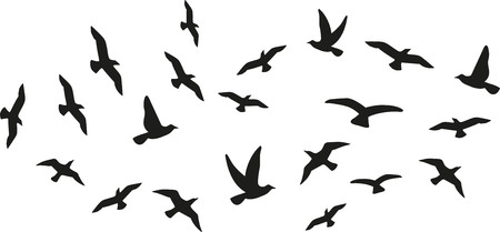 flock of birds: Flock of flying birds