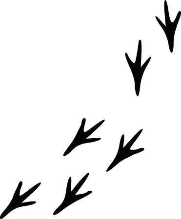 birds: Bird footprints track