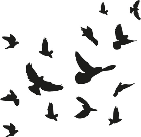 Background of flying birds flock