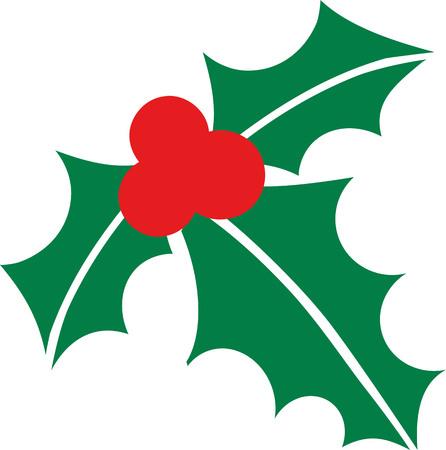 mistletoe: Christmas mistletoe