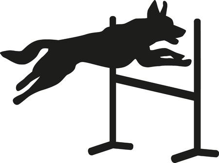 Dog agility jumping over hurdle