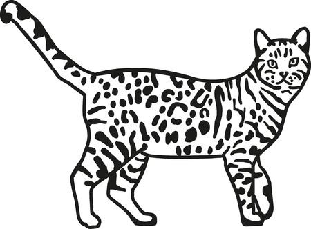 bengala gato leopardo