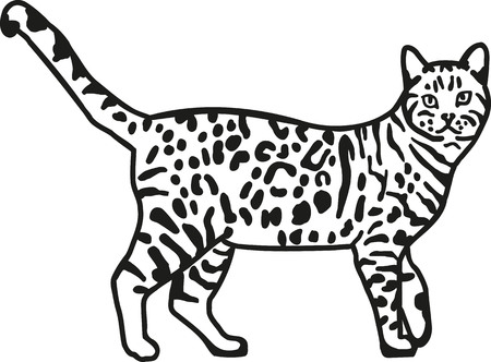 bengal: Leopard bengal cat