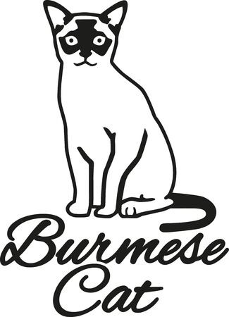 burmese: Burmese cat with breed name