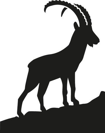 Ibex in den Bergen