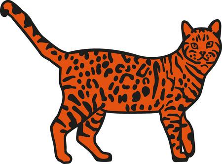 bengal: Leopard bengal cat orange Illustration
