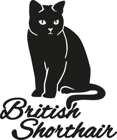 breed: British Shorthair cat with breed name Illustration