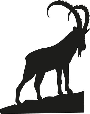 Steenbok op de rots