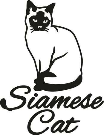 siamese cat: Siamese cat with breed name Illustration