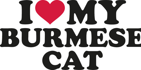 burmese: I love my burmese cat