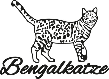 bengal: Bengal cat with breed name