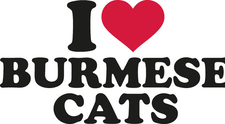 burmese: I love burmese cats
