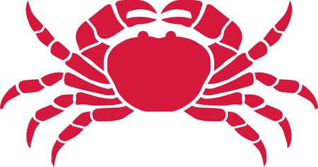 cancer crab: Red cancer crab