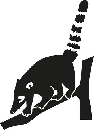 Coati on a tree branch