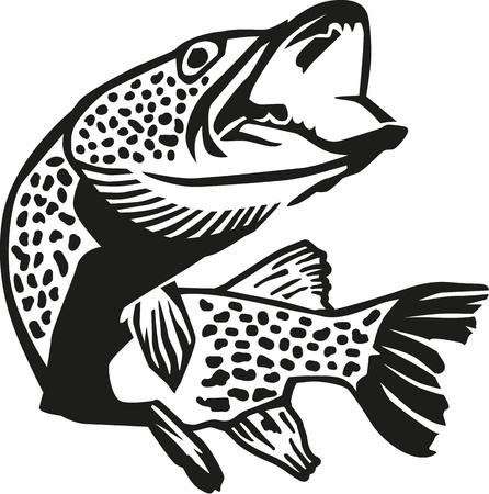 pike: Detailed pike fish