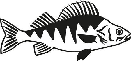 perch: Perch fish