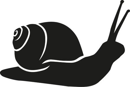 babosa: silueta del caracol