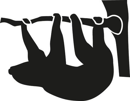 oso perezoso: Pereza que cuelga de una rama en el árbol Vectores