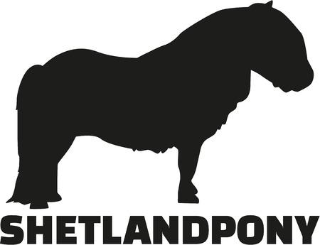 shetland: Shetland pony