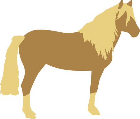 Haflinger horse Фото со стока - 51172204
