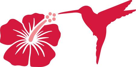 humming: Hummingbird with hibiscus flower Illustration