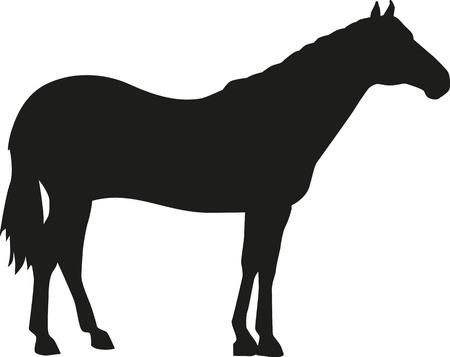 Quarter Horse silhouette