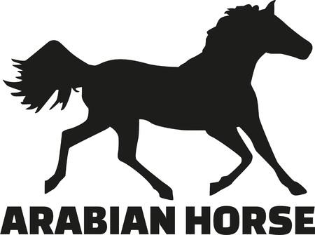 arabian horse: Arabian horse