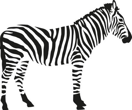 Zebra Silhouette auf weißem Hintergrund isloated