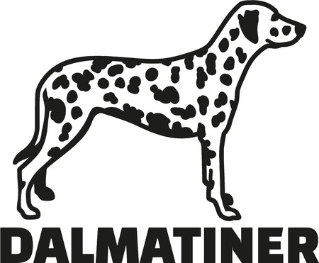 Dalmatian with breed name german